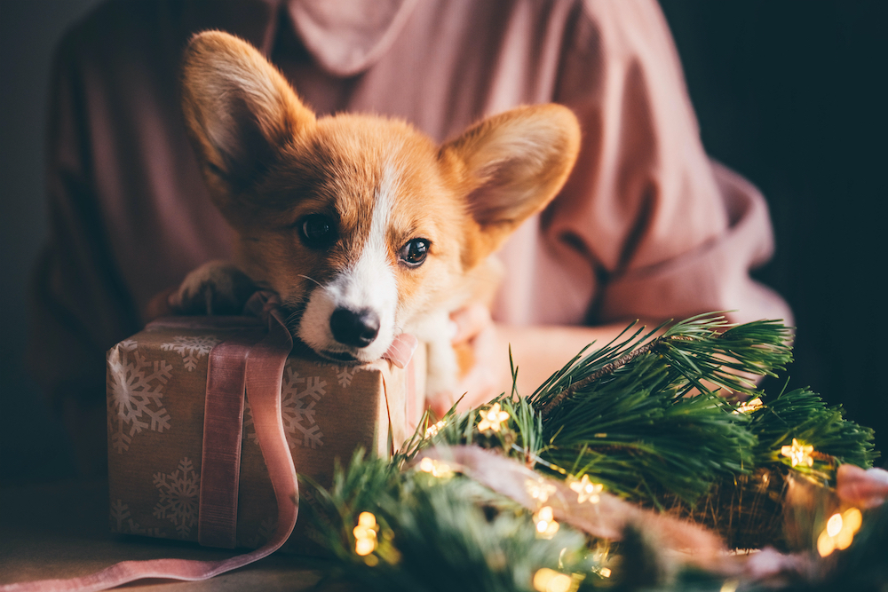 Puppies as Presents