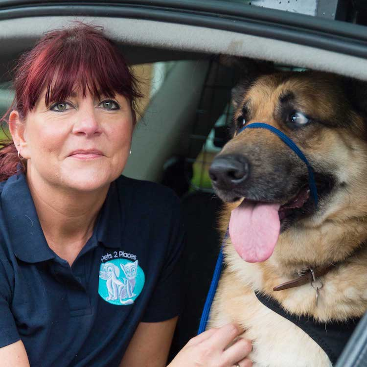 transporting your dog safely - a woman and a dog sat in the boot of a car