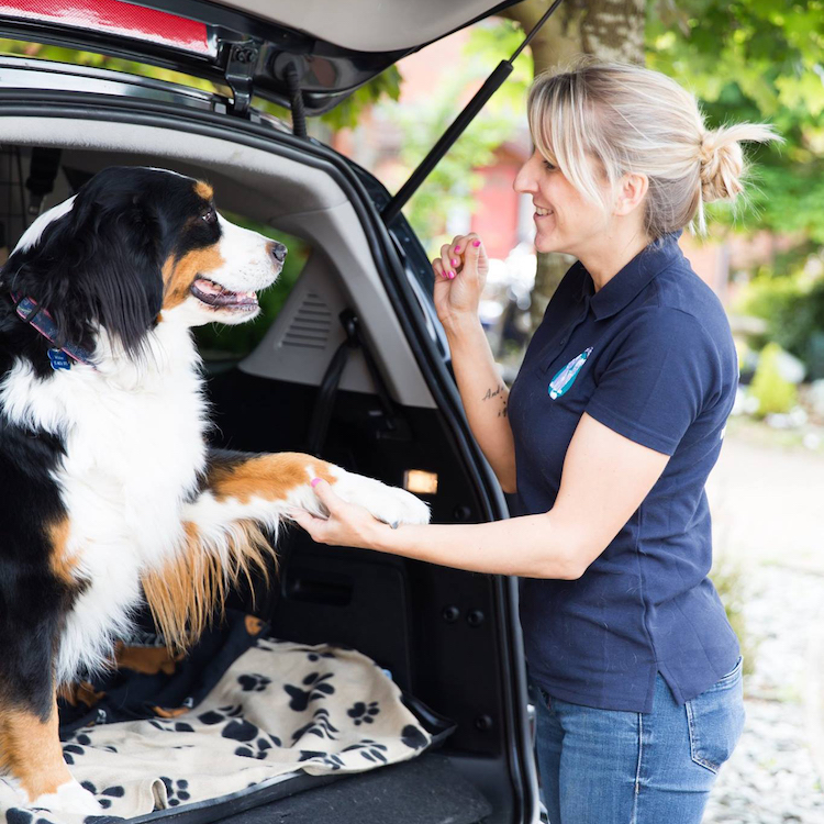 transporting your dog safely - a woman talking to a dog in the boot of a car