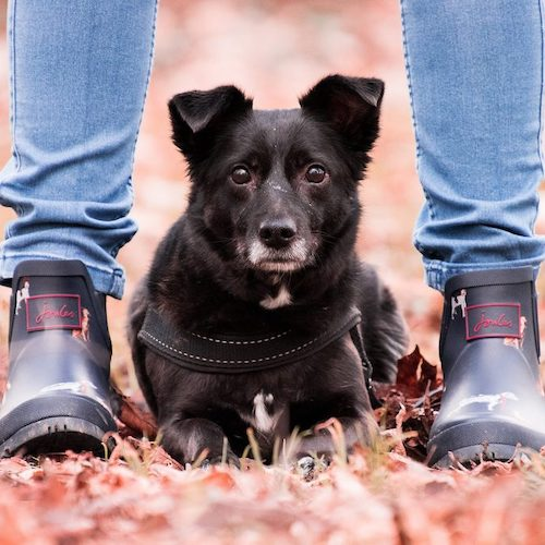 welcoming home a rescue dog - a dog between the ankles of a person