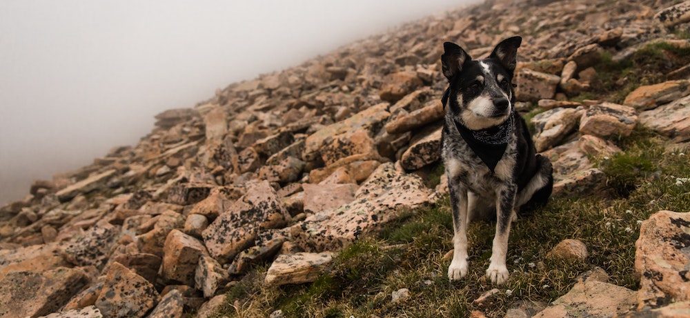 10 reasons to take a hike with your dog
