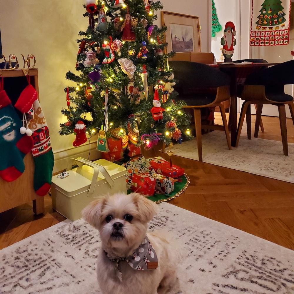 Christmas at home : Lori and Princess Buttercup