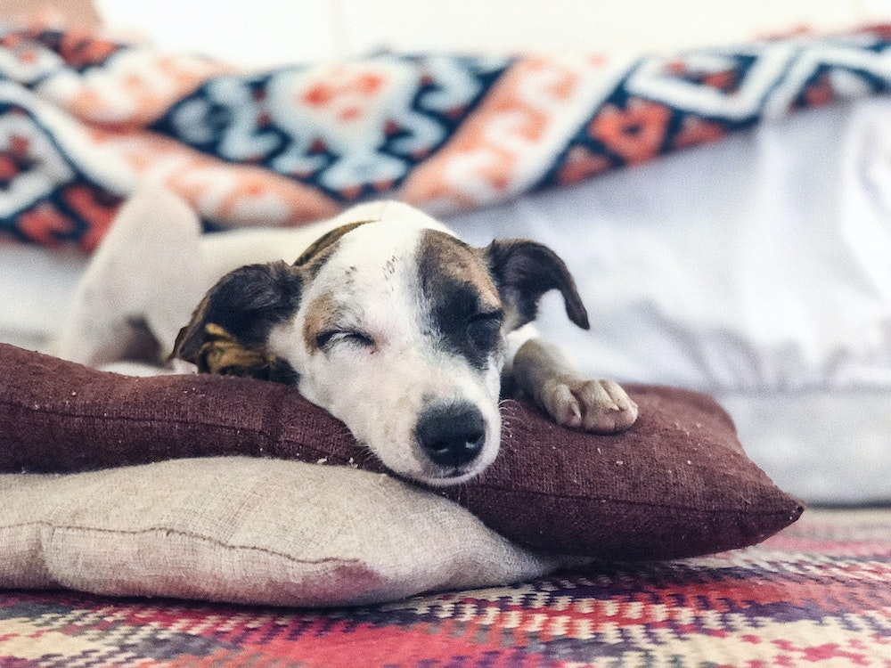 Winter Dog Care Top Tips