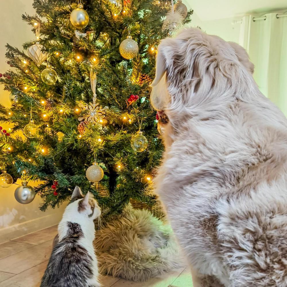 Christmas at home : Ralph + Norah