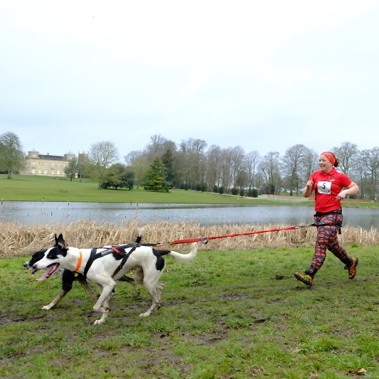 A woman runs behind two dogs that are tied to her on a patch of grass by a canal
