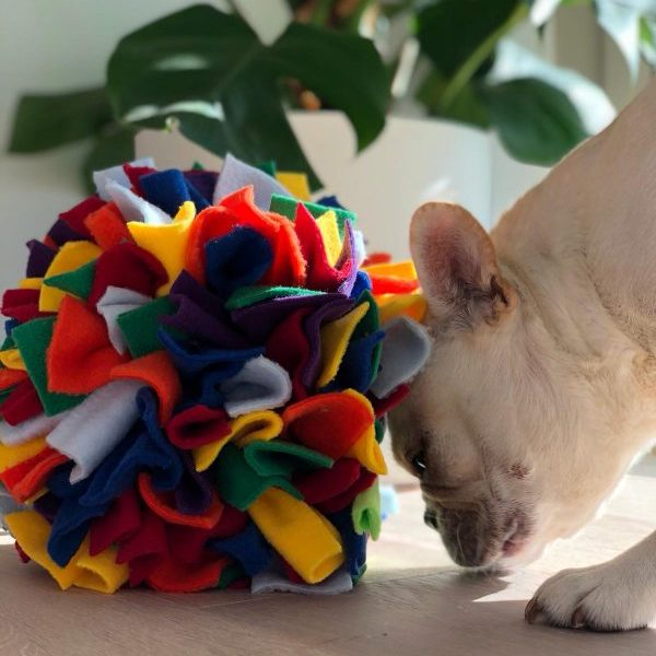A pale french bulldog plays with a Feast Fleece Ball. It is about the size of the dogs head, or a small melon. The Feast Fleece Ball is made up of multi-coloured strips of fabric arranged in a ball. A tool to stop dogs from eating too fast.